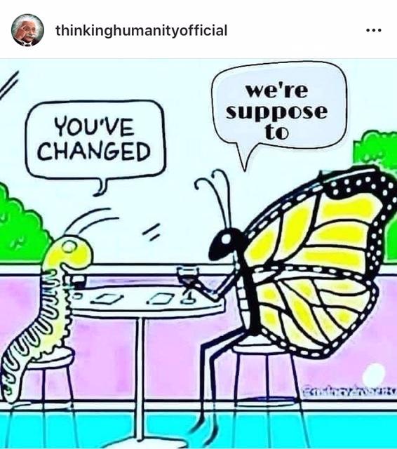 Fjäril, puppa, change